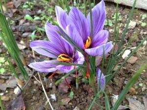 Val Trompia fioritura 2014