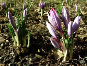Valtellina fioritura 2014